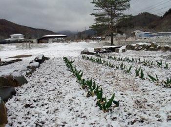 雪20140406.jpg